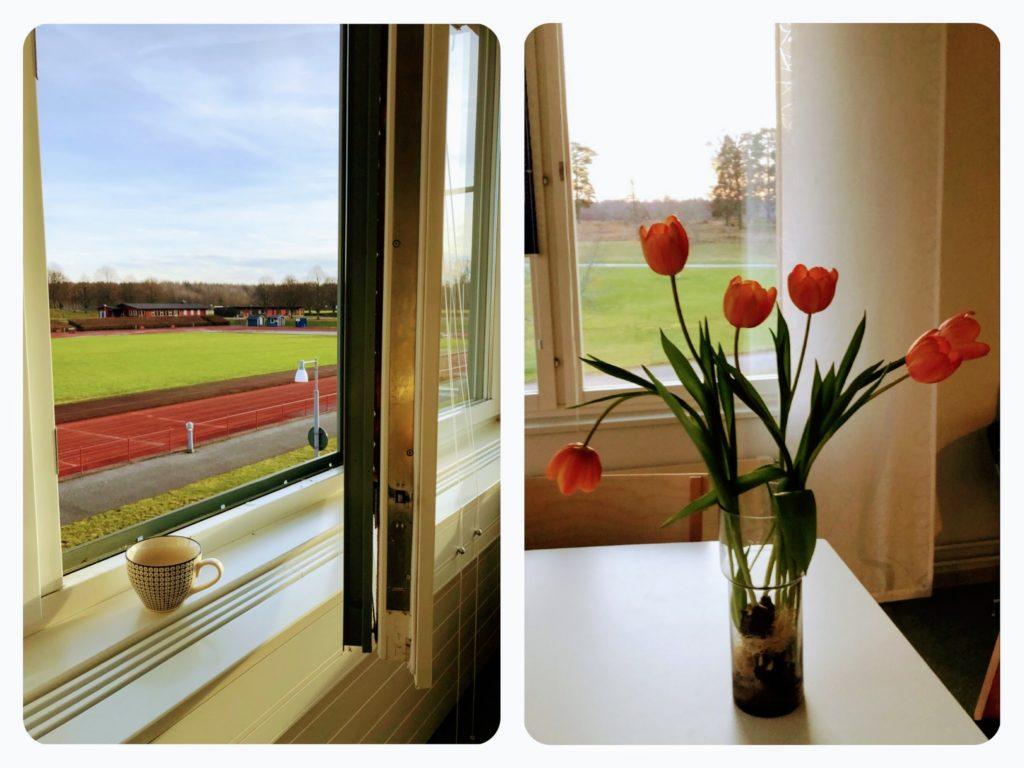 Utsikt från projektkontoret i januariljus - en kaffekopp i ett fönster och tulpaner på ett bord.